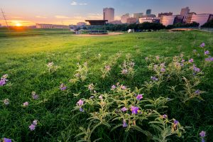 park with spring flowers just outside downtown fort worth