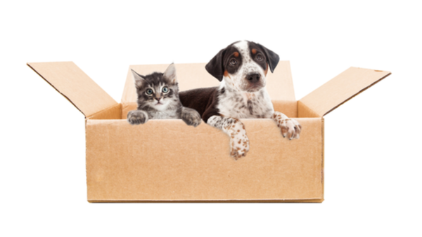 Can You Afford to Adopt a Pet?